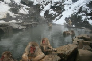More Macaques